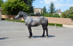 HARMONIE DU VILLON - trait percheron